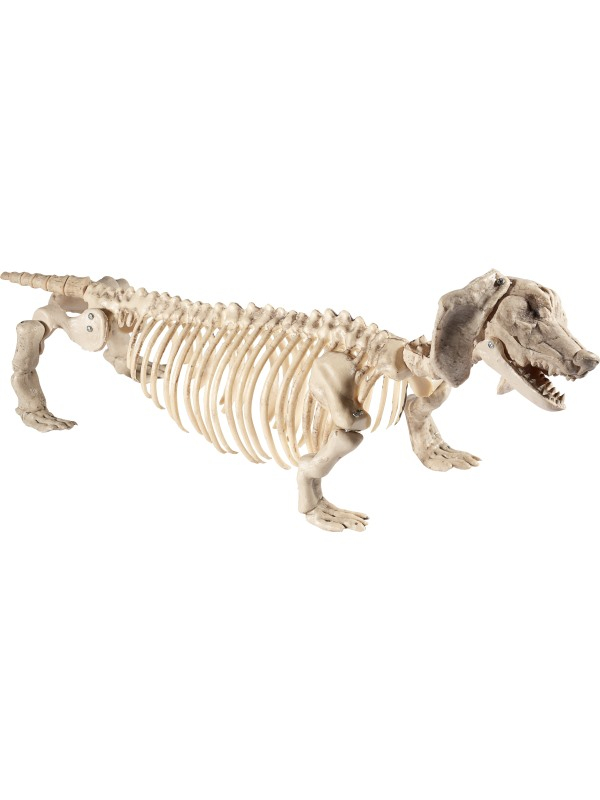 Hond Skeleton