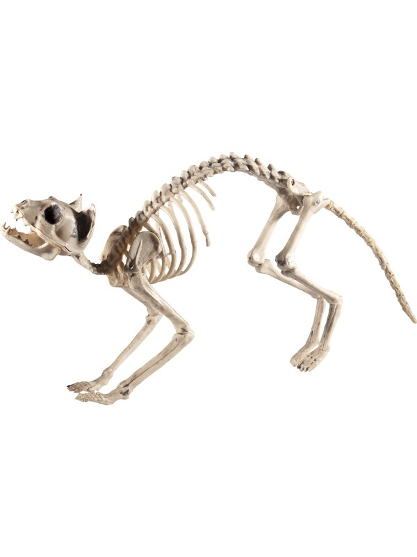Skeleton kat halloween decoratie